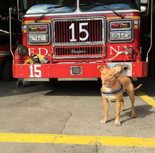"Today, she is a member of the Lower East Side ""Fort Pitt"" FDNY station."