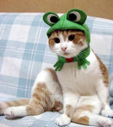 Froggy Cat Halloween Costume