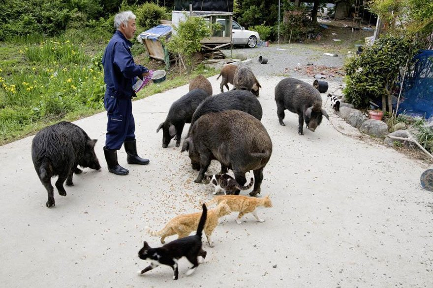 Fukushima Animal Rescues