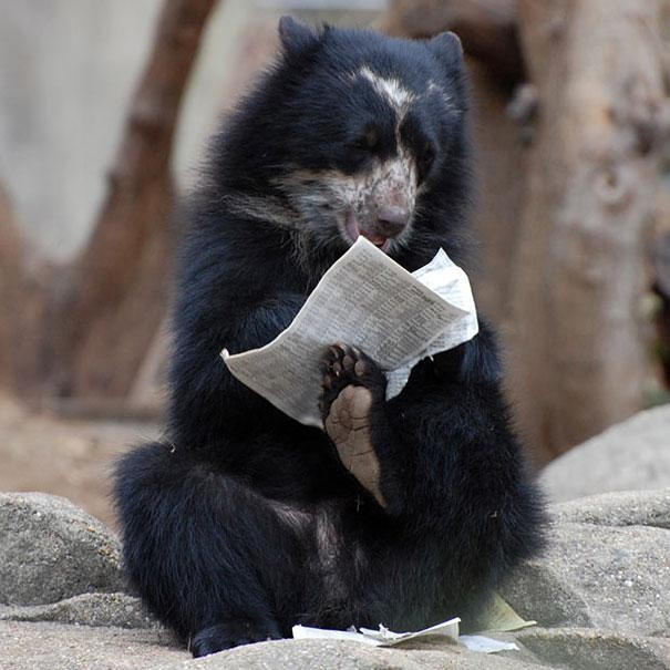 Funny Bear Reading A Newspaper