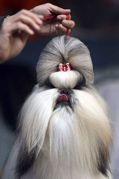 Funny Dog Haircut - Long Hair
