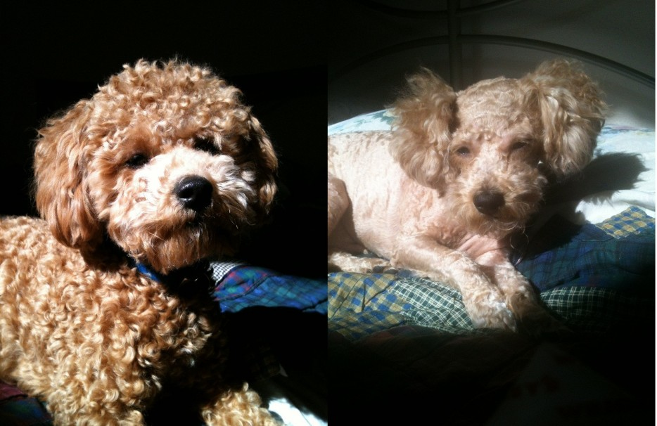 Funny Dog Picture - Before and After