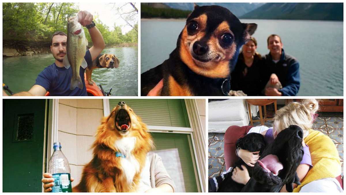Funny Dogs Featured Image