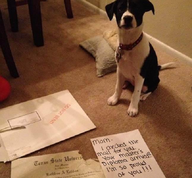 My Dog Ate My Diploma