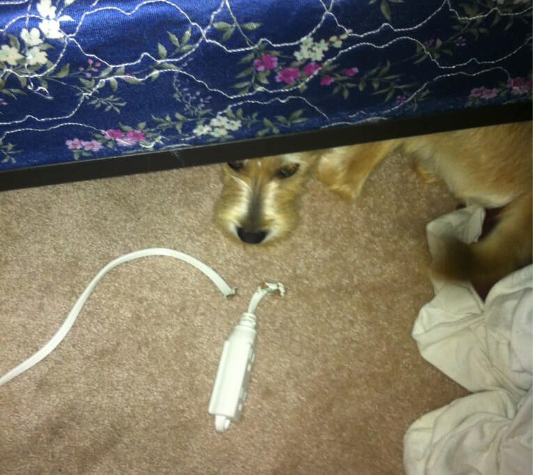 Power Strip Pup