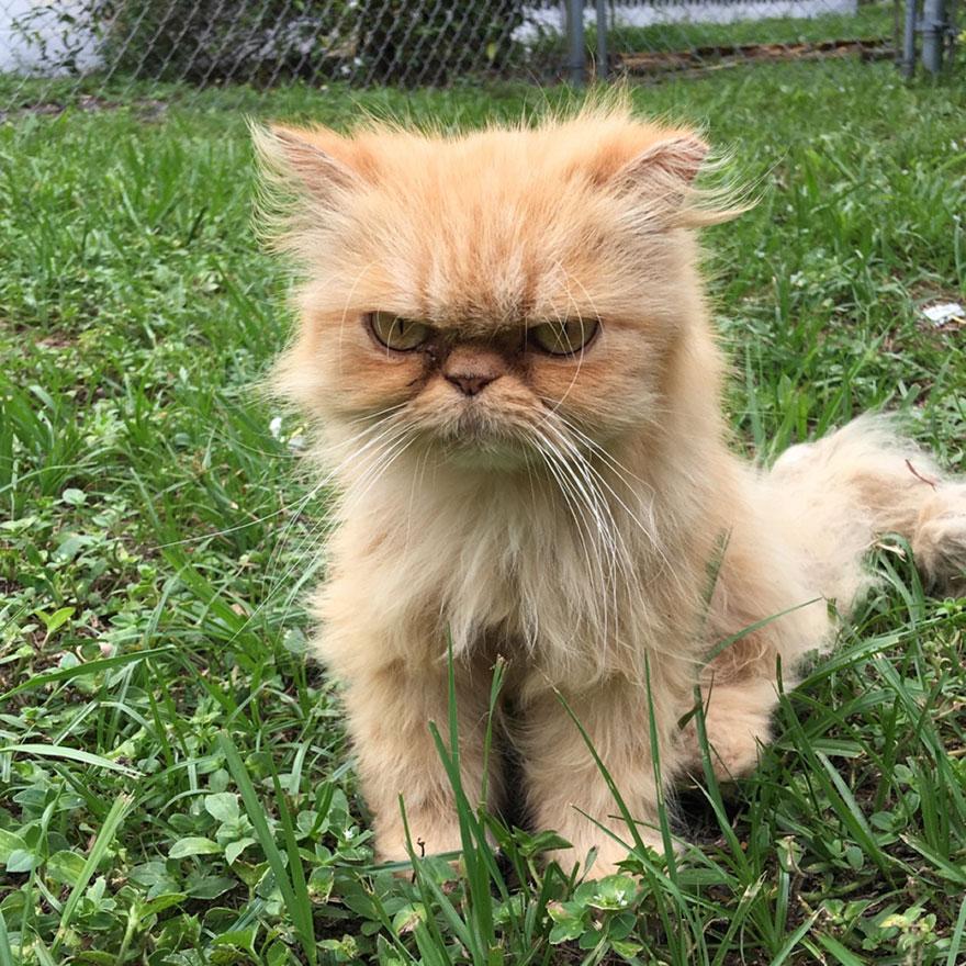 Grumpy Cat Adopted