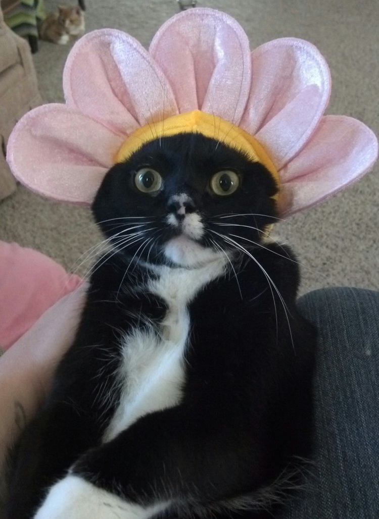 19 cats in Halloween costumes are demanding an apology