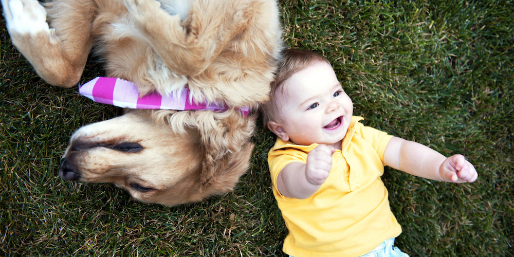 Happy person and happy dog - emotional barometer