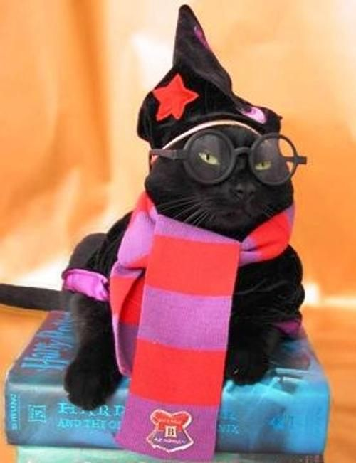 Harry Potter Cat - Halloween Costume