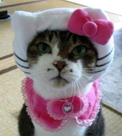 Hello Kitty Cat Halloween Costume