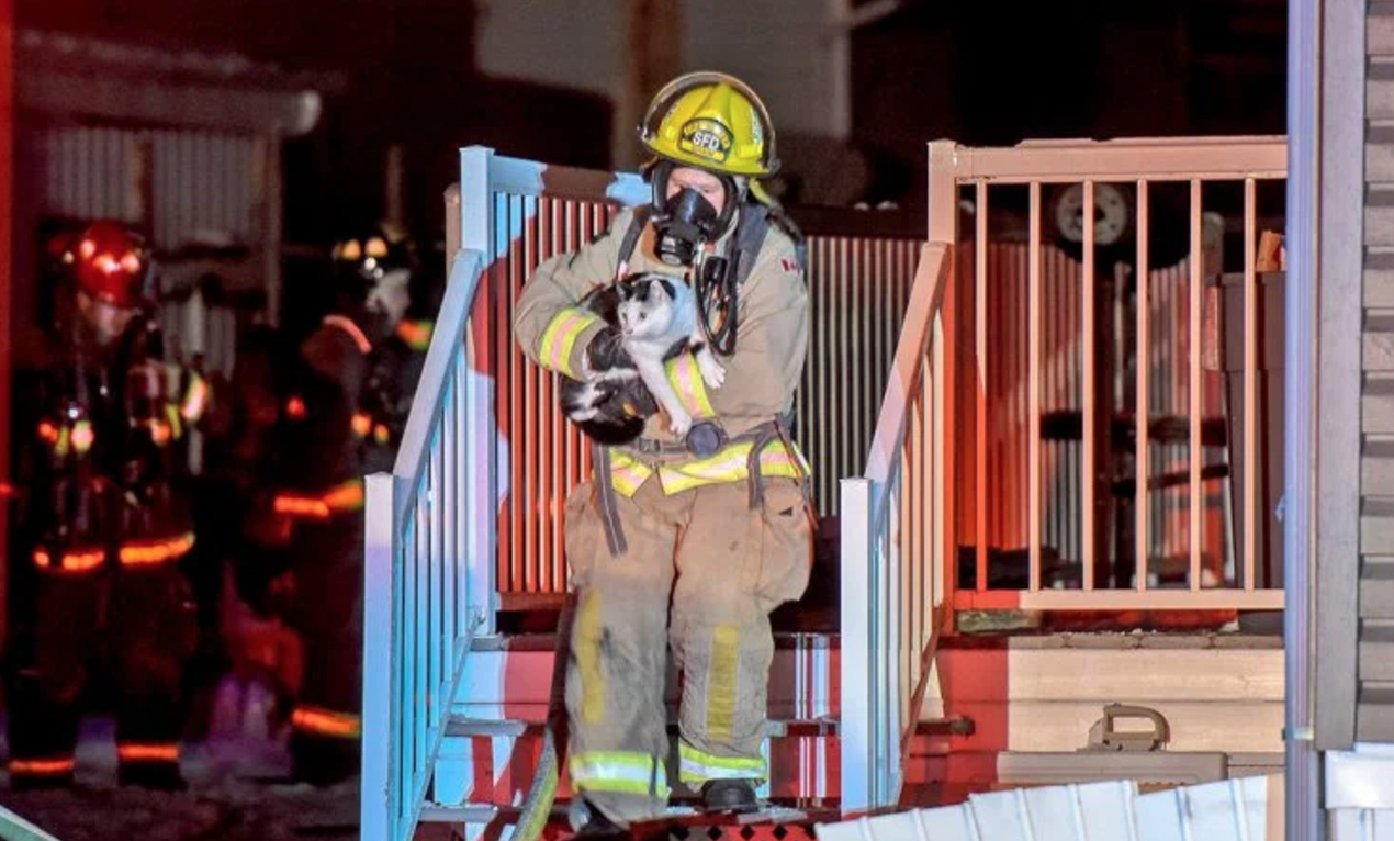 This Cat Repeatedly Bit Their Owners Until They Woke Up During A House Fire