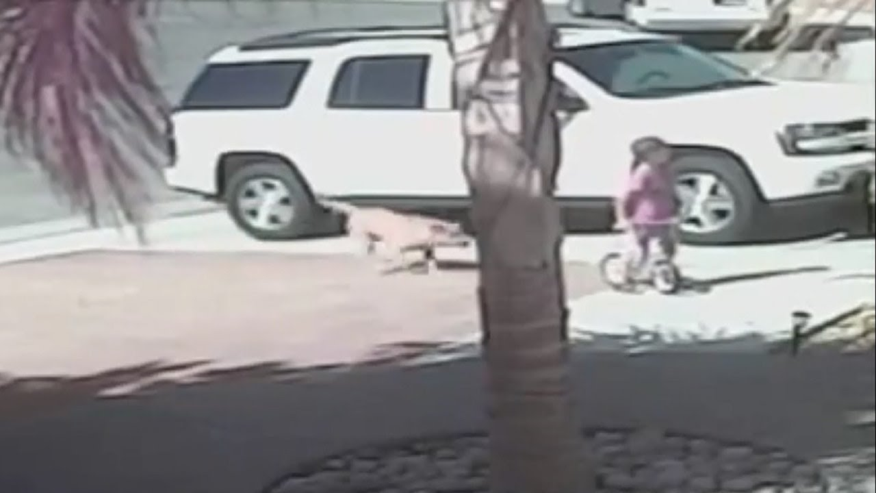 This Cat Fought Off A Vicious Dog To Save A 4-Year-Old Boy