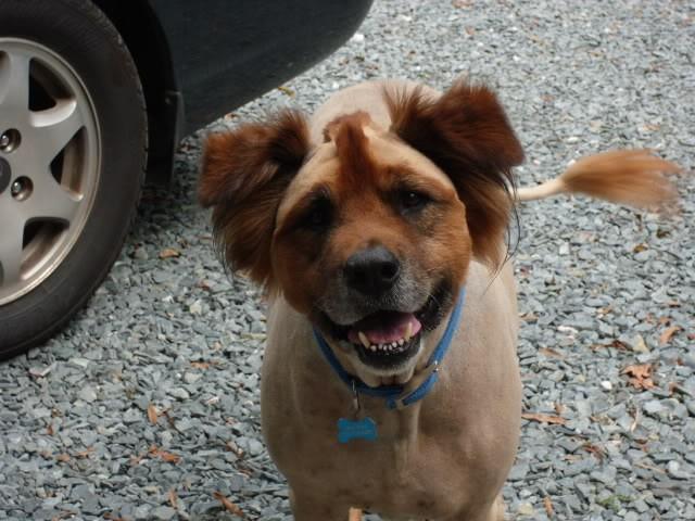 Hilarious Funny Dog Mohawk