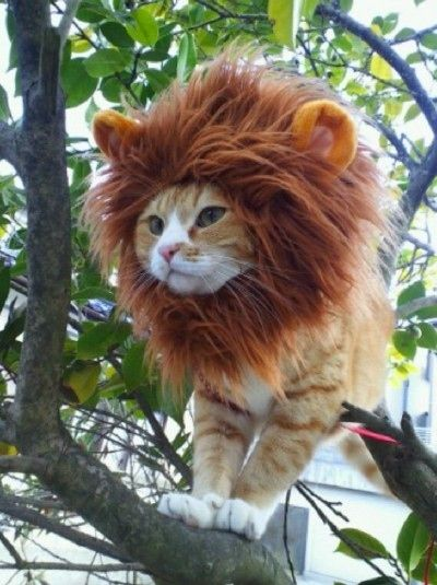 Lion Cat Halloween Costume
