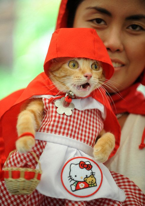 Little Red Riding Cat - Halloween Costume