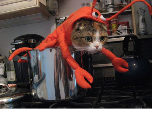 Lobster Cat Halloween Costume