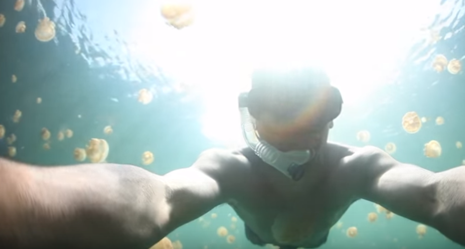 Man swims with 20 million jellyfish