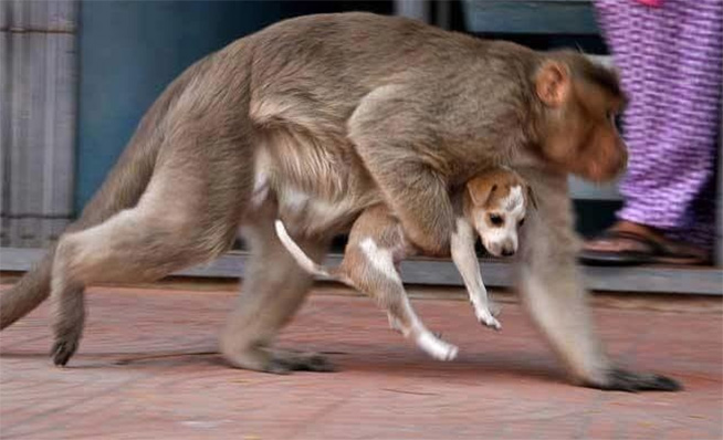 Monkey adopts a stray dog