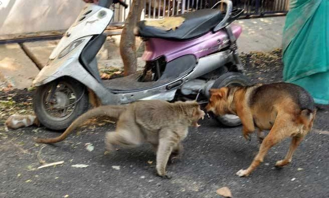Monkey has adopted a stray dog in India