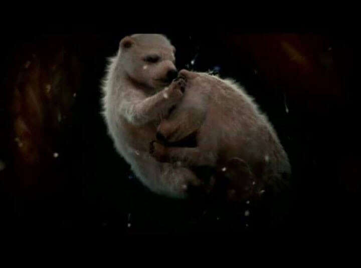 Polar-Bears-in-Womb.jpg