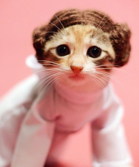 Princess Leia Halloween Cat Costume