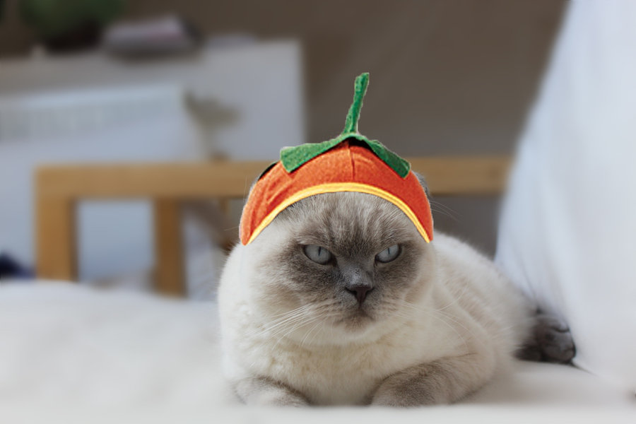 Pumpkin Cat Halloween Costume