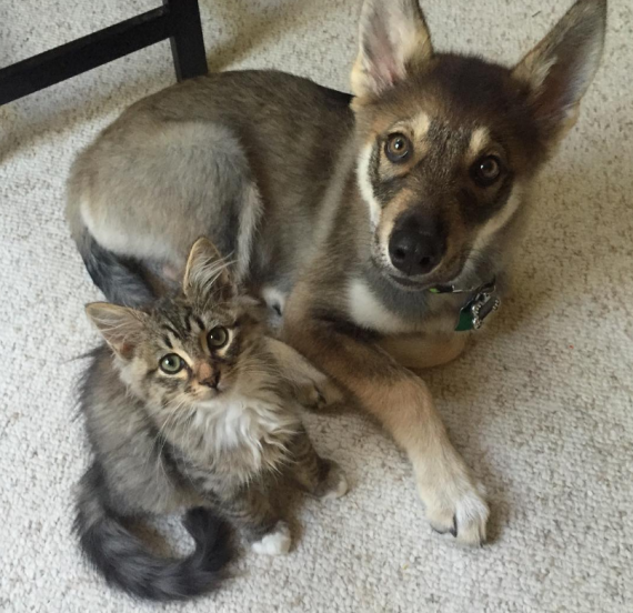 Puppy and cat are best friends