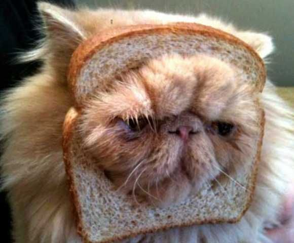 Pure Bred Cat Halloween Costume