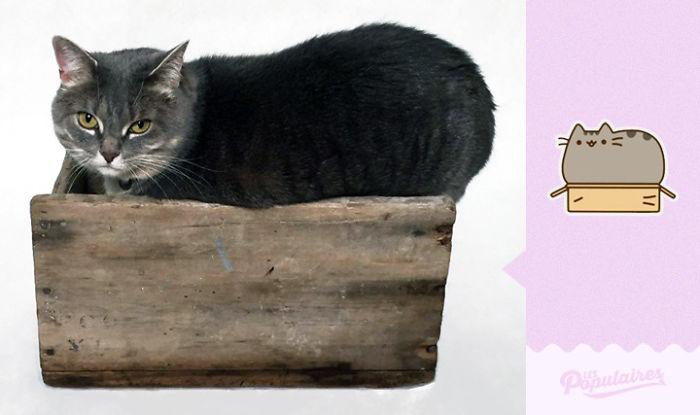 Pusheen Cat - The Box