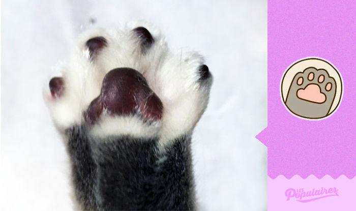 Pusheen Cat - The Hi-Five