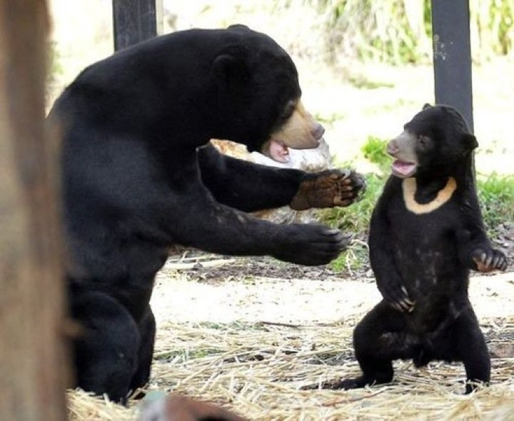Real Bears Having A Family Conversation