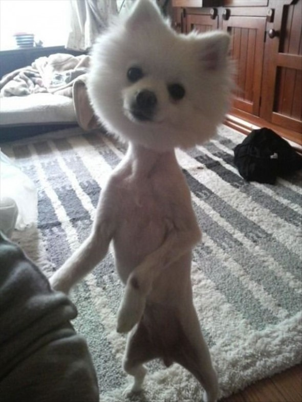 Really Funny Dog Haircut
