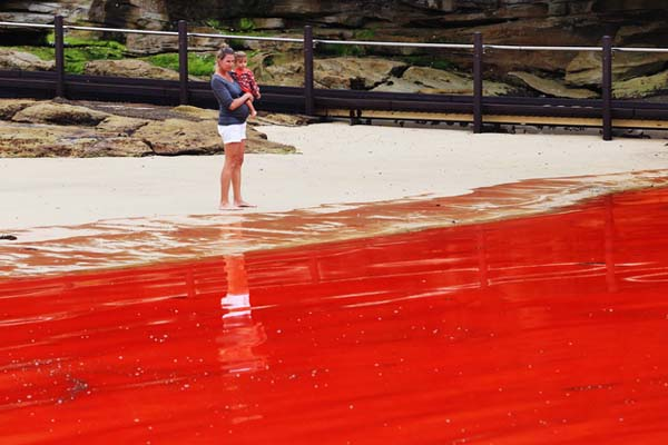 Red Tide - Natural Occurrence