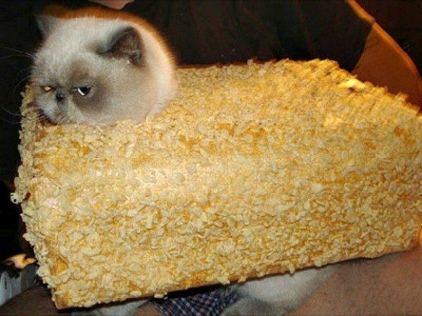 Rice Krispies Treat Cat
