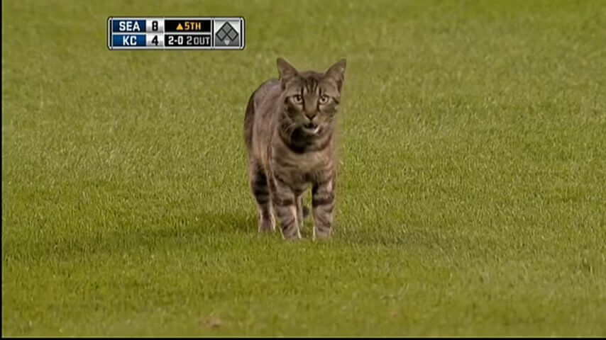 SEA@KC_ Feline takes field in Mariners-Royals 5th screenshot.jpg