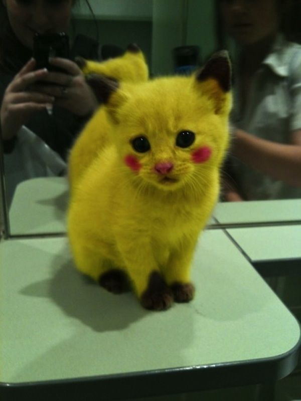 Sad Pikachu Cat Halloween Costume