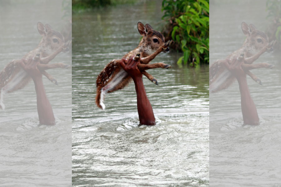 This Guy Saved A Deer From A Flood