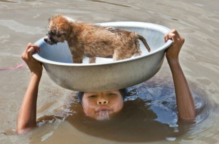 Little Boy Saves A Puppy From A Flood