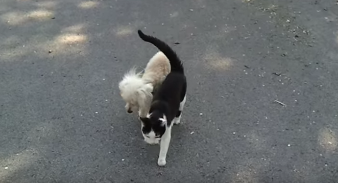 Seeing eye cat guides a blind dog home