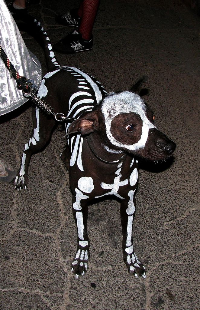 These Halloween Dog Costumes Will Put A Smile On Your Face - 29 adorable animals that will put a smile on your face