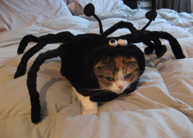 Spider Cat Halloween Costume