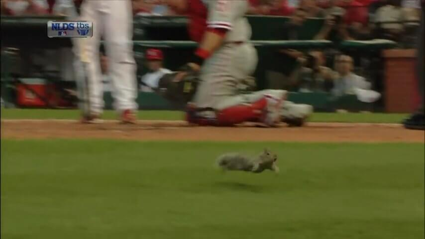 St Louis Rally Squirrel screenshot.jpg