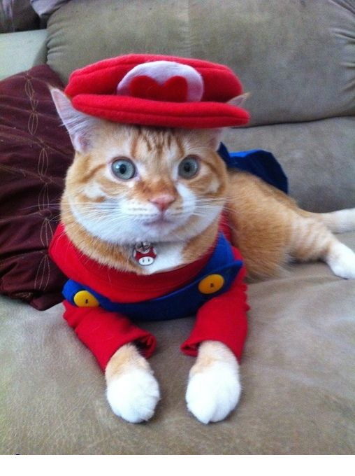 Super Mario Cat Halloween Costume