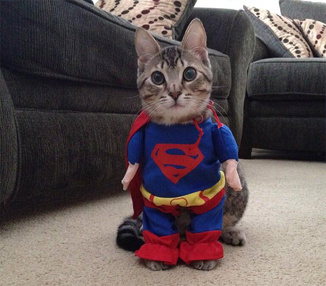 Superman Cat Halloween Costume