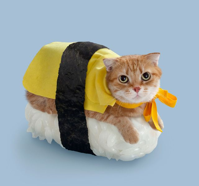 Sushi Cat Halloween Costume