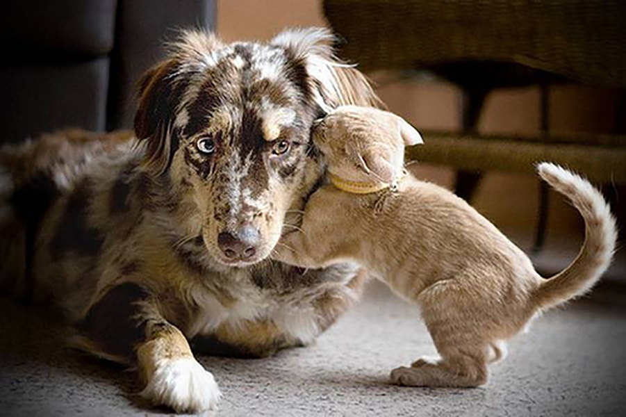 When A Cat Hugs A Dog