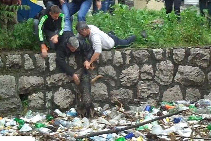 Men Help Dog In Filthy Water