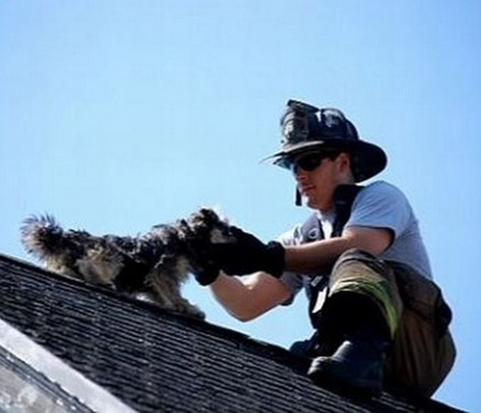 Rooftop Rescue