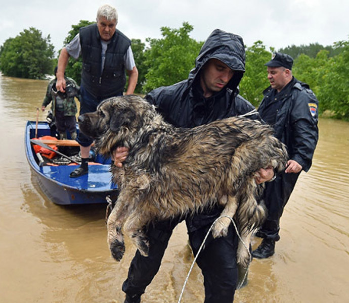 Huge Dogs Gets Saved