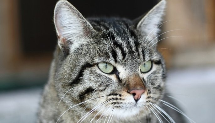 Winnie The Cat Detected A Gas Leak And Saved Her Family's Lives